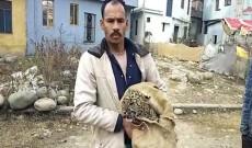 Leopard cub caught alive by Rajouri man