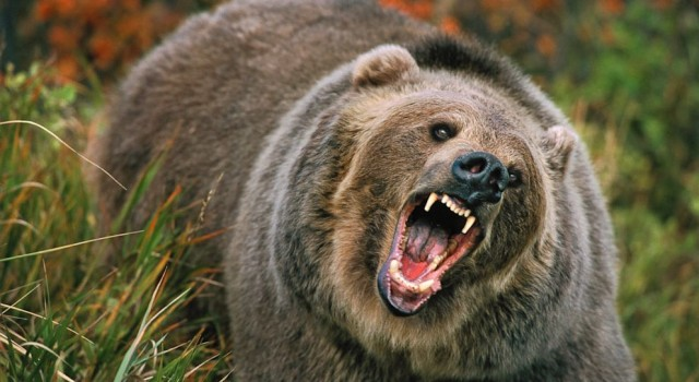Bear appears in Srinagar outskirts Attacks duo, shifted to hospital