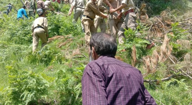 40 KANALS FOREST LAND HAS BEEN EVOCATED IN TANGDAR