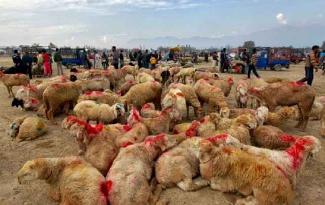 """""""Above 3 Lakh animals on every Eid- Ul Adha"""", Kashmir likely to face dearth of sacrificial animals this time"""
