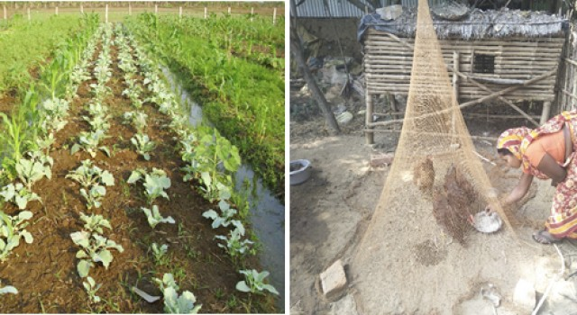 DAY-NRLM Promoting Nutri-gardens and Backyard Poultry to Improve Livelihoods and Nutrition Security