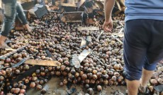 Fire incident entrapped apples of 7 lakhs in Kreeri Baramulla