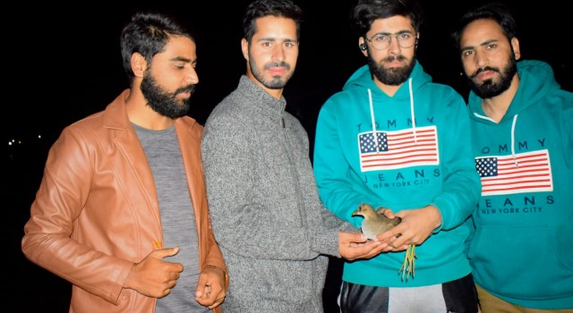 Team Birds of Kashmir rescued a bird during evening hours of October 13th