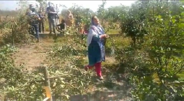 Unknown persons chopped down apple trees in Anantnag